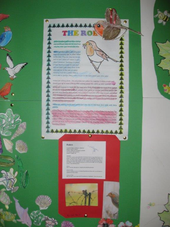 Noticeboard 2nd term robin